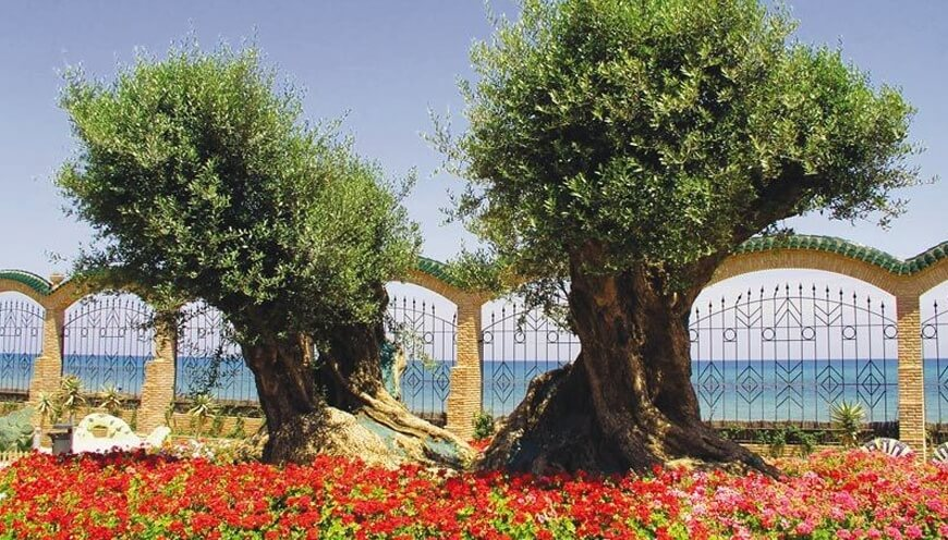Marina d or garden live nature on your spain family holidays for Jardines marina d or